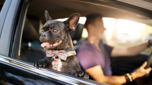 Everything You Need To Know About Traveling With Your Pet These Days