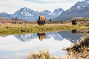 A&K Develops New Private Journeys to Alaska and American West